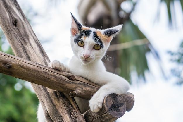 Chaton est assis sur une branche de bois dans le jardin