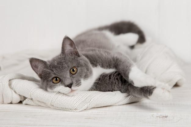 Chaton gris drôle sur un plaid tricoté blanc. bien joué et reposé.