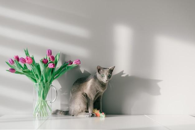 Chaton gris drôle posant sur table avec bouquet de tulipes dans un vase en verre.