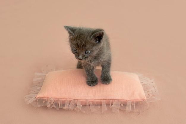 Chaton gris avec des griffes sur un oreiller rose