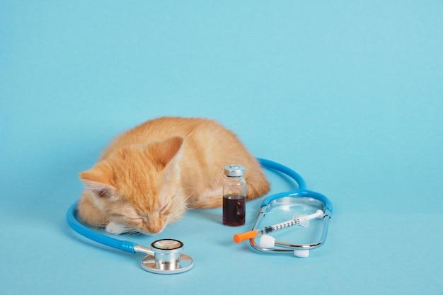 Chaton mignon au gingembre endormi, stéthoscope, seringue à insuline et médicament dans une bouteille d'injection sur fond bleu, concept de vaccination des animaux et de traitement concept de clinique vétérinaire