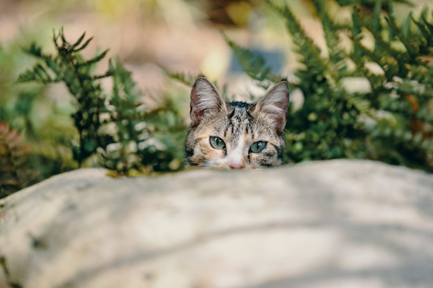 Chaton mignon avec de beaux yeux derrière une pierre parmi les plantes