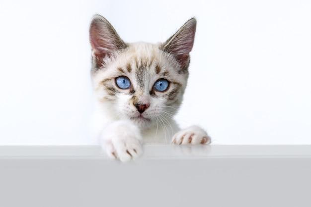 Chaton mignon sur blanc