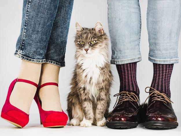Chaton mignon et charmant et jeune couple dans des chaussures élégantes