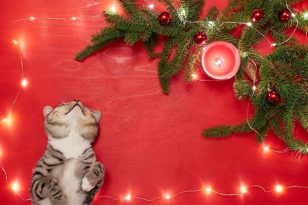 Chaton mignon couché et regardant l'arbre de noël avec des boules rouges et des lumières