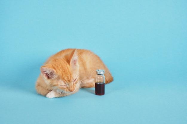 Chaton mignon de gingembre et médecine dans une bouteille pour l'injection sur un fond bleu, vaccination vétérinaire