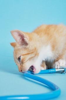 Le chaton mignon de gingembre mord le stéthoscope sur le fond bleu