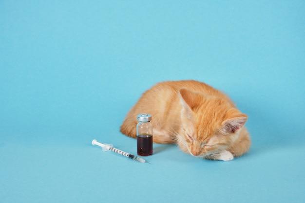 Chaton mignon de gingembre, seringue d'insuline et médecine dans la bouteille d'injection sur le fond bleu, espace de copie de concept de vaccination animale