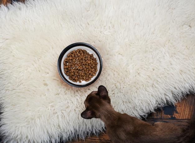 Chaton mignon mangeant des granules pour animaux de compagnie