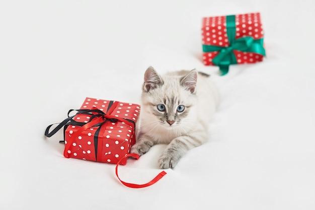 Chaton de noël avec des cadeaux