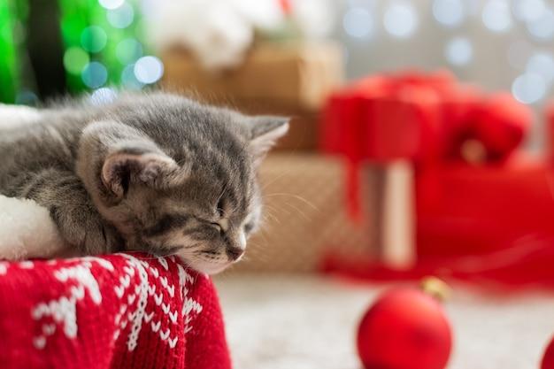 Chaton de noël dormant à côté de cadeaux de lumières d'arbre.