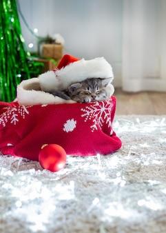 Chaton de noël portant chapeau de père noël dormir à la maison sur un tapis avec des lumières.