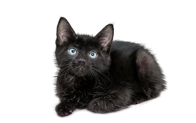 Chaton noir assis devant la caméra isolé