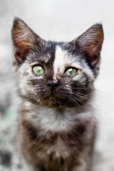 Un chaton noir avec une bande sur le front regarde la caméra, mise au point sélective. animaux de compagnie adorables.