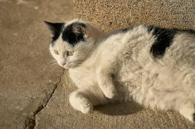 Chaton noir et blanc allongé sur le sol tout en profitant de la chaleur qui vient du soleil.