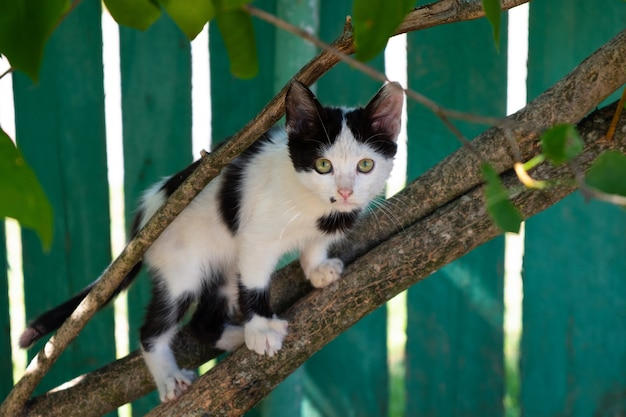 Chaton noir et blanc assis sur une branche, l'animal se joue à l'extérieur.