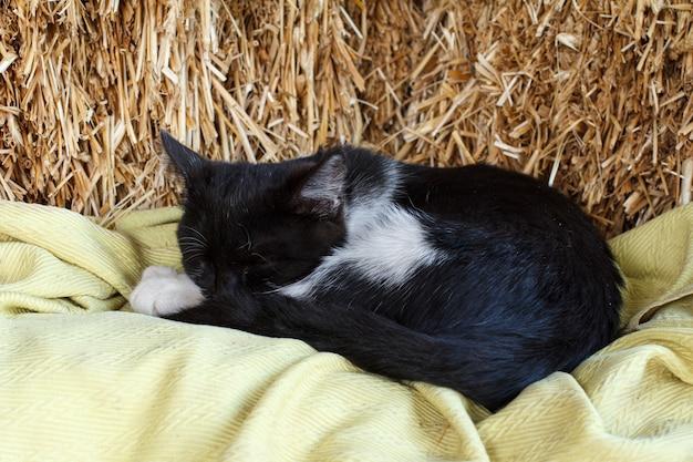 Le chaton noir et blanc dort sur une pile de paille.