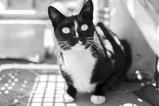 Chaton noir mignon noir et blanc