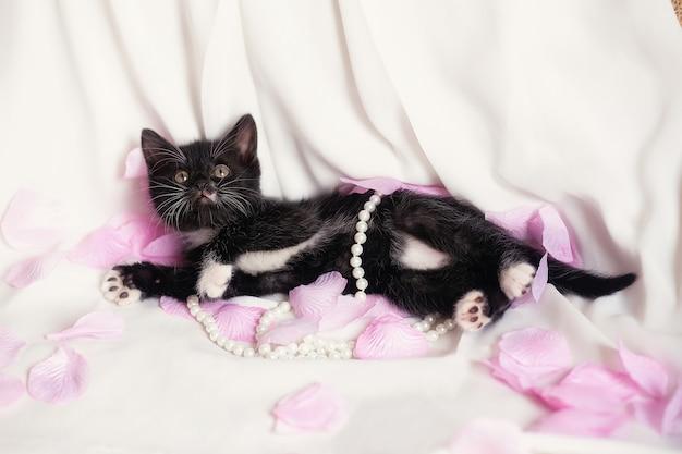Chaton noir mignon avec perles et pétales de rose