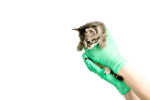 Chaton nouveau-né malheureux dans les mains du vétérinaire en gros plan