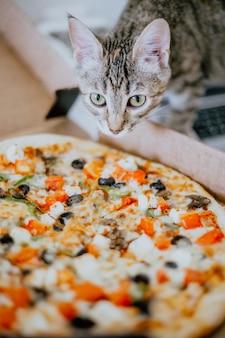 Chaton renifle la pizza