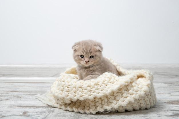 Un chaton rouge est assis sur un plaid beige tricoté.