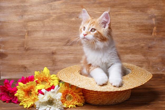 Chaton rouge maine coon assis dans un chapeau de paille