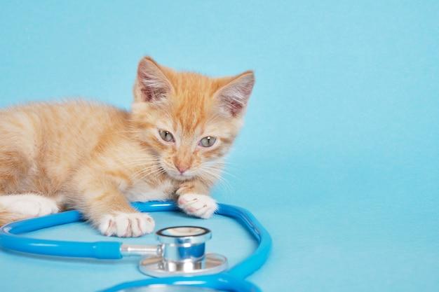Le chaton rouge mignon joue avec le stéthoscope sur l'espace de copie de fond bleu