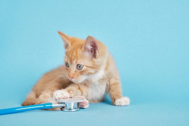 Le chaton rouge mignon joue avec le stéthoscope sur le fond bleu