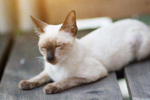 Le chaton siamesecat assis et déguste sur une terrasse en bois ensoleillée
