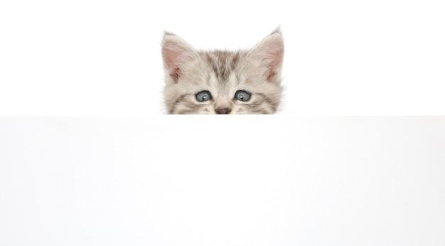 Chaton suspendu au-dessus d'un poster vierge, vous ajoutez le message.