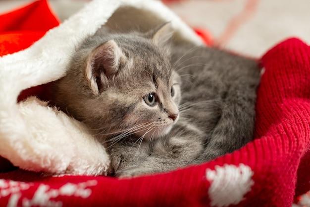 Chaton tigré drôle se trouve sur le lit de noël du chat rouge.