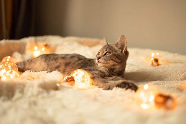 Chaton tigré gris paresseux se reposant sur une couverture tricotée douce sur un canapé décoré de lumières led sur lig...