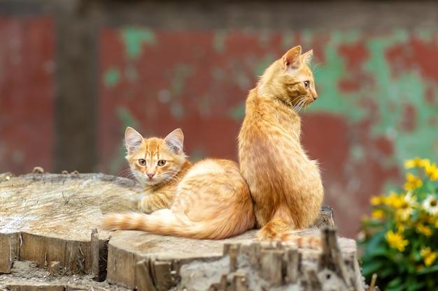 Les chatons au gingembre sauvage se reposent dans un jardin arboré