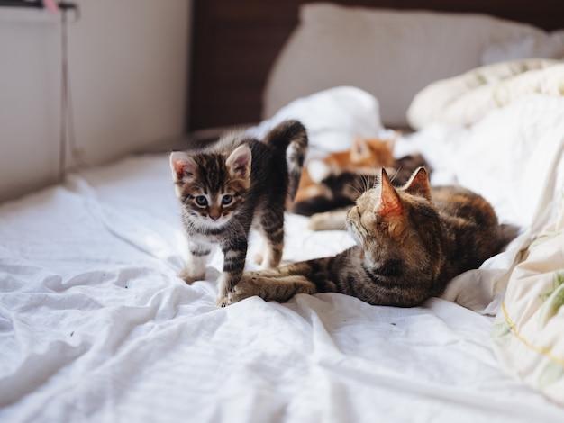 Chatons avec un chat se trouvent à l'intérieur sur le lit