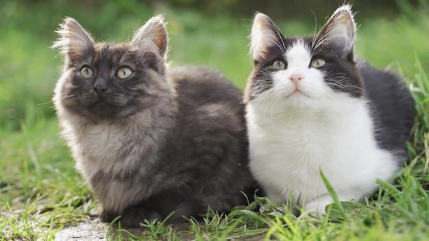 Chats assis dans l'herbe verte