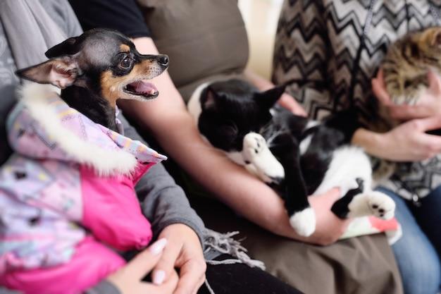 Chats et chiens dans la file d'attente pour examen dans une clinique vétérinaire