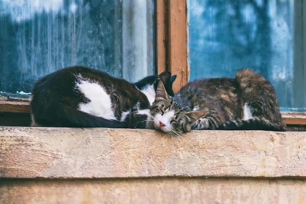 Chats dormant sur un rebord de fenêtre