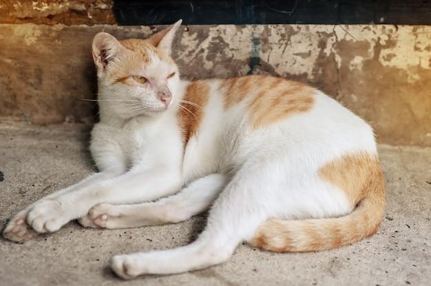 Les chats dorment où plancher