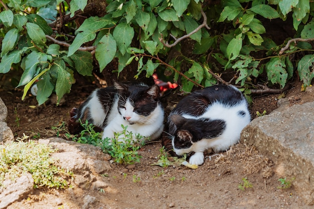 Les chats errants dorment dans les buissons