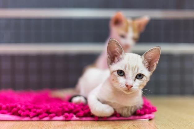 Les chats gisent sur le tapis