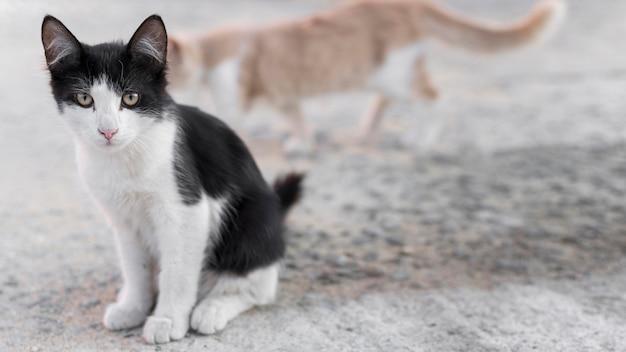 Chats mignons à l'extérieur sur le trottoir avec espace copie