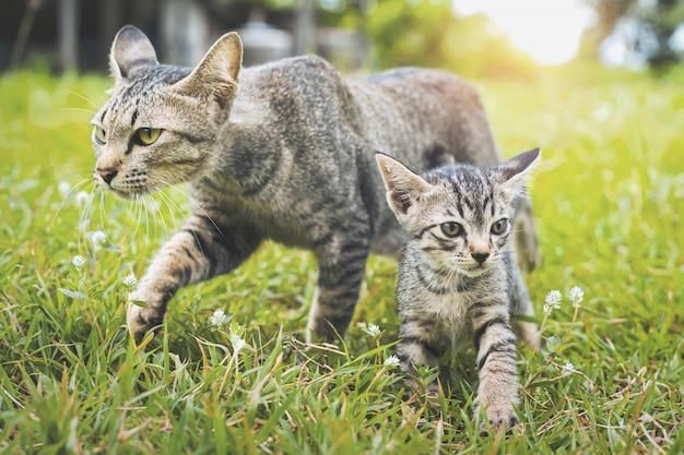 Chats mignons marchant en jouant sur l'herbe verte