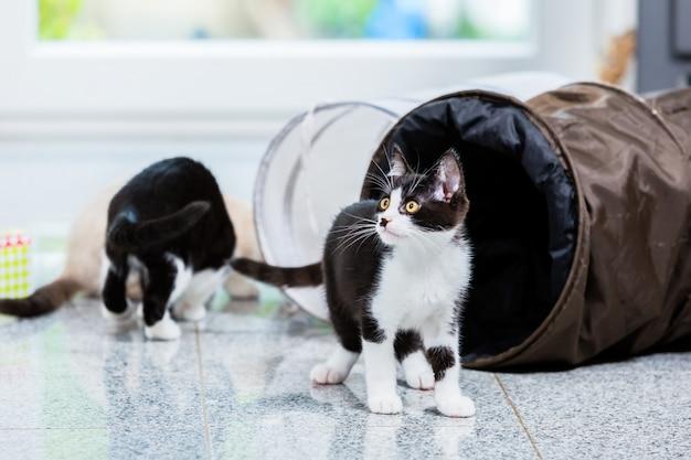Chats mignons avec tunnel de jeu au sol