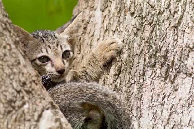 Les chats ont l'air mignon et fait des gestes