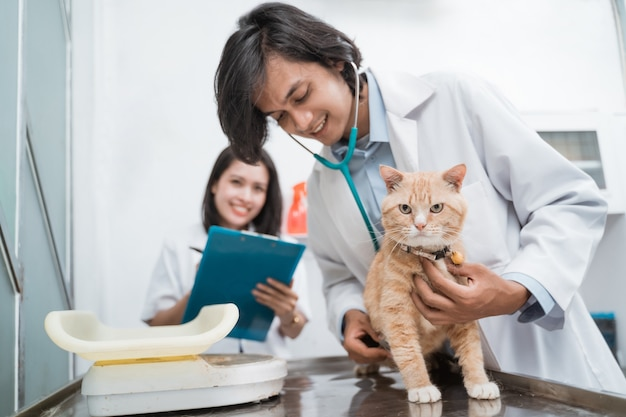 Les chats sains sont examinés à l'aide d'un stéthoscope par un médecin de sexe masculin et une femme médecin écrivant des notes à la clinique vétérinaire
