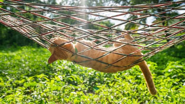 Les chats se reposent, dorment et dorment dans des berceaux.