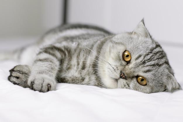 Les chats sont accroupis sur un lit blanc dans la chambre.