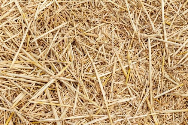 Chaume de paille de grains bouchent