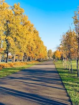 Chaussée d'asphalte à l'automne avec de grands peupliers jaunes.